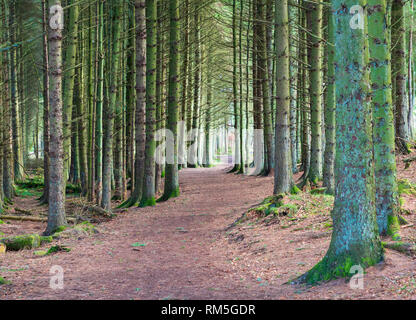 Forest path at Beecraigs Country Park in West Lothian , Scotland UK - Stock Image