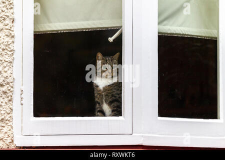 Northampton. U.K. 6th March 2019. Christchurch road. A Tabby cat in the warm sat on the window sill, looking out towards the road on a wet, dull, grey - Stock Image