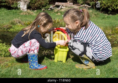 two young girls pond dipping in garden wildlife pond removing tadpoles in children's bucket, sisters, three and seven years old. UK. March. - Stock Image