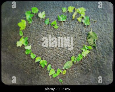 A heart made of green leaves - Stock Image