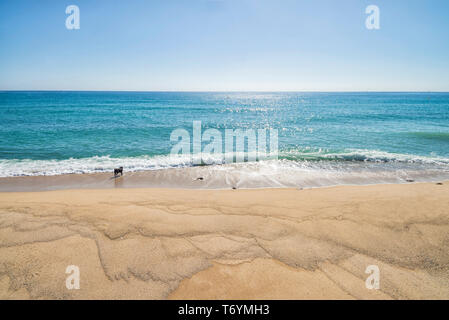 Front view of a dog enjoying with waves at seashore in a sunny day - Stock Image