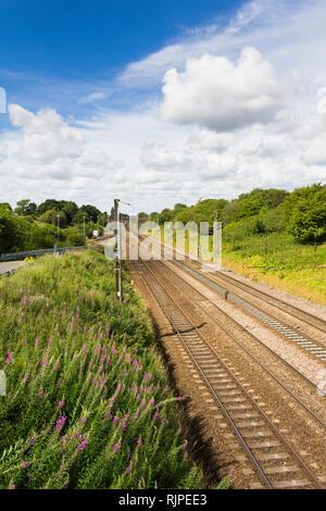 West Coast Main Line railway near Farington curve junction between Leyland and Preston, Lancashire. No trains, empty track. Rosebay wilowherb lineside - Stock Image