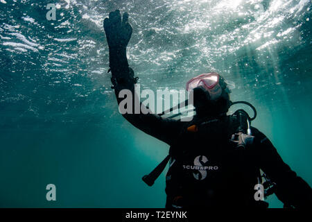 A scuba diver reaches for the surface off the coast of Cornwall, UK. - Stock Image