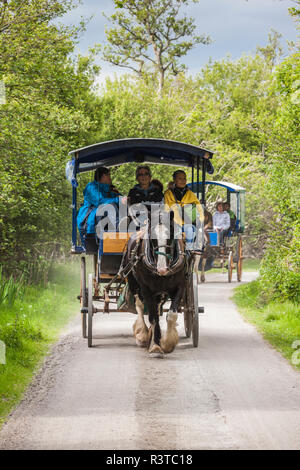 Ireland, County Kerry, Ring of Kerry, Killarney, Jaunting Cars, horse-drawn carriages - Stock Image
