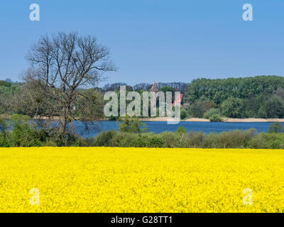 Blooming rape, spring, lake Cambs, Camber See, near town Schwerin, Mecklenburg-Vorpommern, Germany - Stock Image