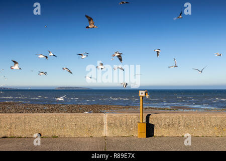 Seagulls flying over the promenade at Llanfairfechan, North Wales coast - Stock Image