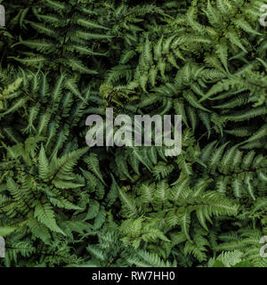 Green Painted Ferns - Stock Image