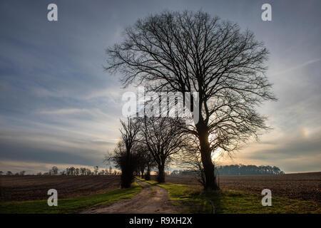 Winter Trees at dusk, Essex England. Dec 2018 - Stock Image