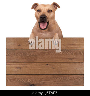 cute terrier dog hanging with paws on blank wooden promotional board sign, isolated on white background - Stock Image