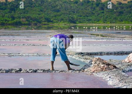 Salt Pans Pan Salt Miner, Ugandan Man, Crater Lake at Queen Elizabeth National Park - Stock Image
