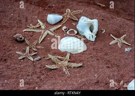 Starfish and seashells lying on the red  Rabida Island beach, Galapagos Islands, Ecuador - Stock Image