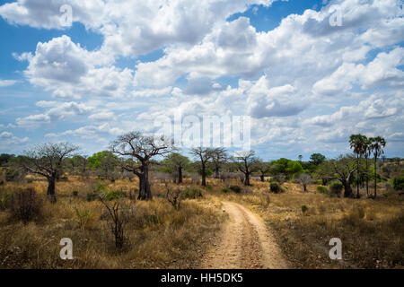 Wild Africa nature with trees and bushes on dry season, Ruaha national park, safari - Stock Image