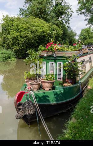 Colourful narrowboat, decked with a array of potted plants and shrubs, on the canal at Blisworth, Northamptonshire, UK - Stock Image