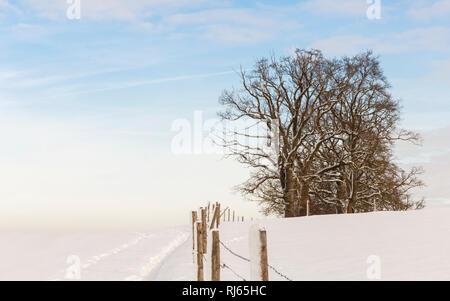 Bäume in einsamer Schneelandschaft - Stock Image