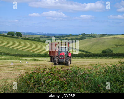 Red Tractor and Trailer with freshly cut grass working in field amongst attractive South Devonshire Countryside, - Stock Image