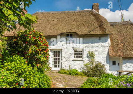 A pretty thatched cottage in Helford, Cornwall, England - Stock Image