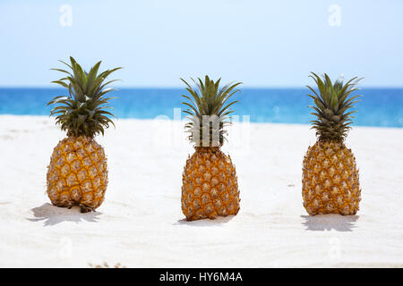 Three pineapples on white sandy beach background - Stock Image