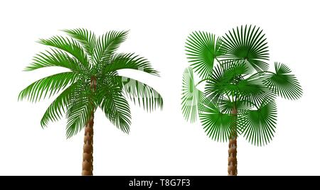 Two Tropical lush dark green palm trees of different types. illustration - Stock Image