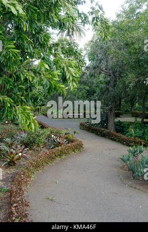Botanical Gardens Jardin Botanico Puerto de la Cruz tenerife canary islands canaries - Stock Image