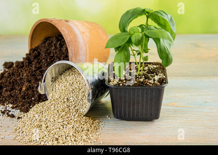 Mixing vermiculite granules pellets with black gardening soil improves water retention, airflow, root growth capacity of all the plants growing in pot - Stock Image