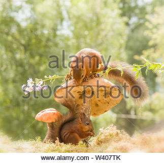 red squirrels on and under an mushroom - Stock Image