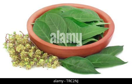 Ayurvedic henna leaves and flower over white background - Stock Image