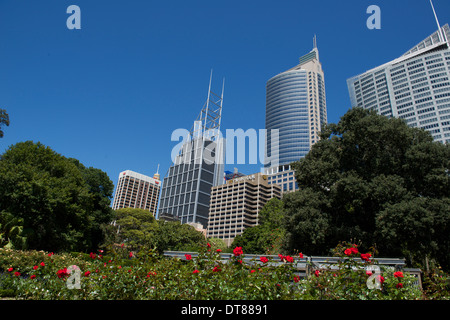 Sydney CBD looking from the rose garden of the Botanic Gardens Sydney Australia - Stock Image