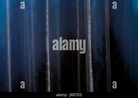 Long-time exposure of a forest at dusk with moving camera. - Stock Image