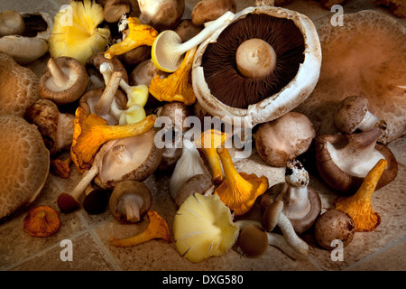 A selection of edible mushrooms - Stock Image
