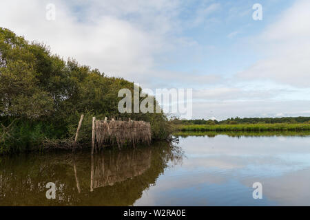 beautiful wetland in the natural park of saint lyphard - Stock Image