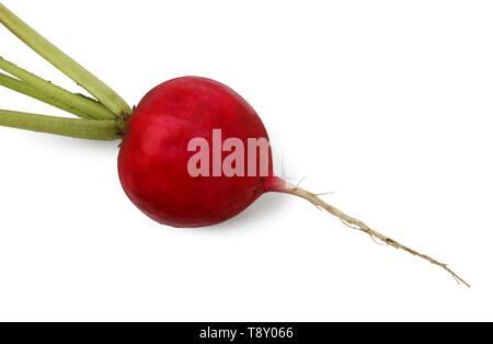 Small garden radish isolated on white background cutout - Stock Image