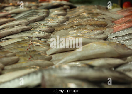 Group of local sea fish on display in a popular fish indoor market in the Indian ethnic Little India in the city state of Singapore. - Stock Image