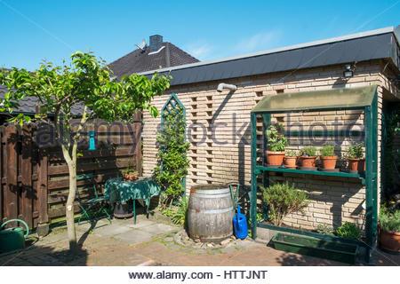 Brick garden house with tomatoes, culinary herbs, rain barrel, Weiki (Actinidia arguta) and a Nashi pear tree (Pyrus - Stock Image