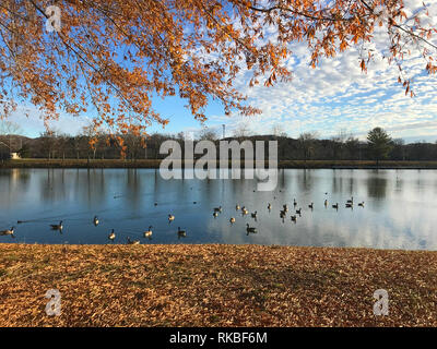 View of the marina and rowing club area at Oak Ridge Marina in Oak Ridge, Tennessee, USA, with Canada Geese and autumn foliage. - Stock Image