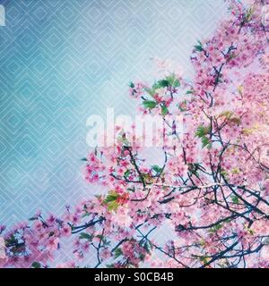 Lovely, light pink sakura or cherry blossoms with green leaves and soft blue sky in the background, with geometric - Stock Image