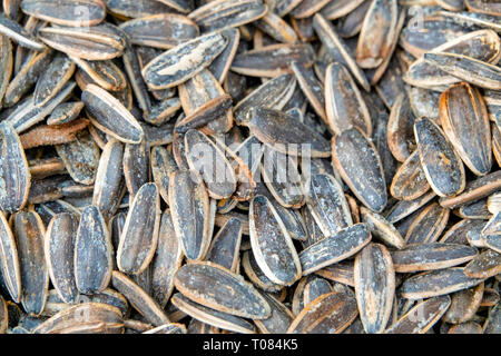 Roasted and salted sunflower seeds - Stock Image