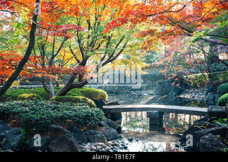 Otaguro Park pond and autumn maple tree in Tokyo, Japan - Stock Image