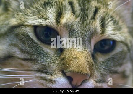 A cat sits still to have its photo taken. - Stock Image