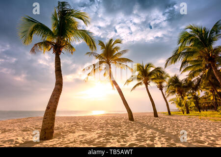 Coconut palm trees against colorful sunset - Stock Image