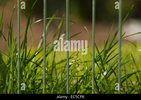 green grass behind of bars - Stock Image