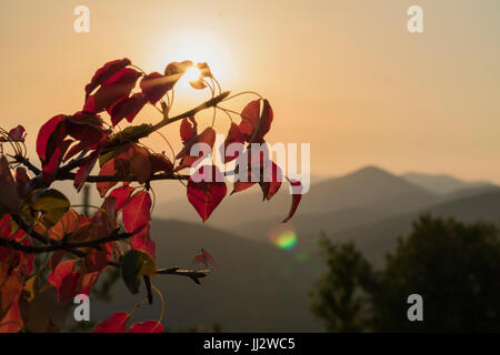 Red Leaf and the sun behaind - Stock Image
