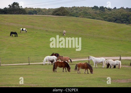 Horses in fields at Hillside Animal Sanctuary in Norfolk - Stock Image