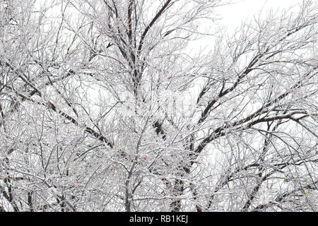 Tree branches covered in ice and snow against a white sky - Stock Image