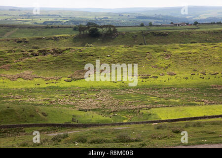 View looking south over the vallum of Housesteads Hill Fort, Hadrian's Wall, Northumberland - Stock Image
