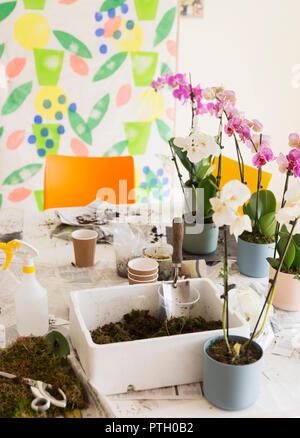 Orchids and potting soil on flower arranging class table - Stock Image