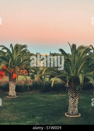 Palm trees - Stock Image