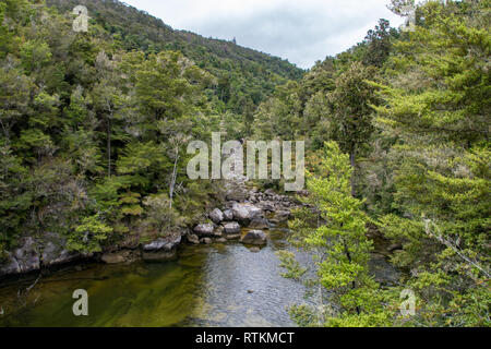 Forest and stream in the Abel Tasman National Park, Nelson, New Zealand - Stock Image