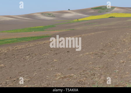 Agricultural land. Treated spacious field in the plane. Ploughing time. Spring. Flowering rape. - Stock Image