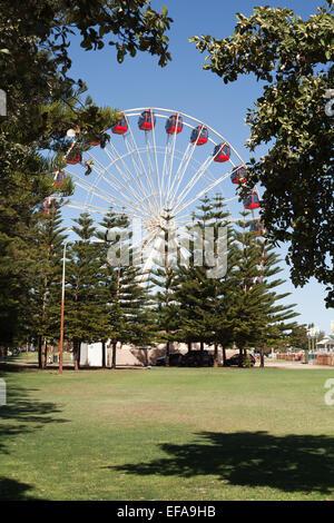 The Fremantle tourist wheel as viewed across Esplanade Park, Fremantle, Western Australia - Stock Image