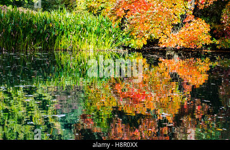 Autumn view of reeds, trees and bushes reflected in lake - Stock Image